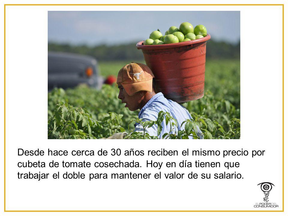 Desde hace cerca de 30 años reciben el mismo precio por cubeta de tomate cosechada.