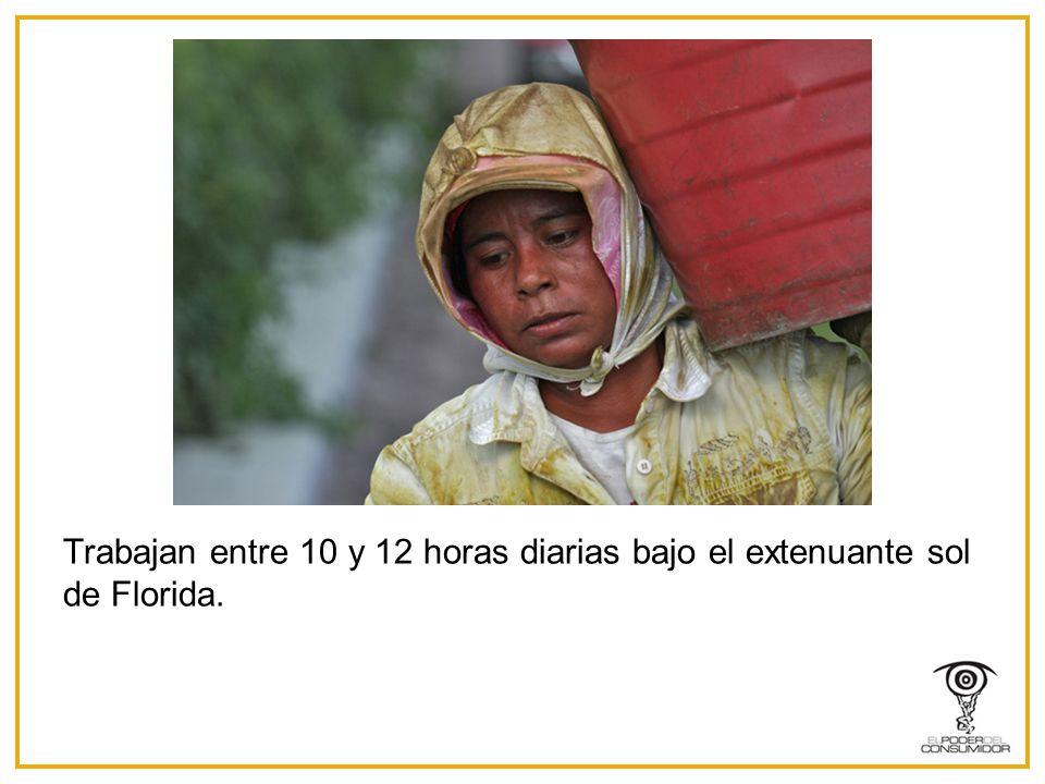 Trabajan entre 10 y 12 horas diarias bajo el extenuante sol de Florida.