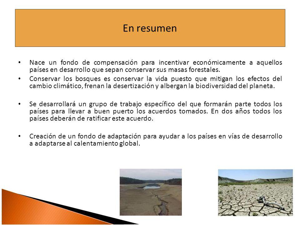 En resumen Nace un fondo de compensación para incentivar económicamente a aquellos países en desarrollo que sepan conservar sus masas forestales.