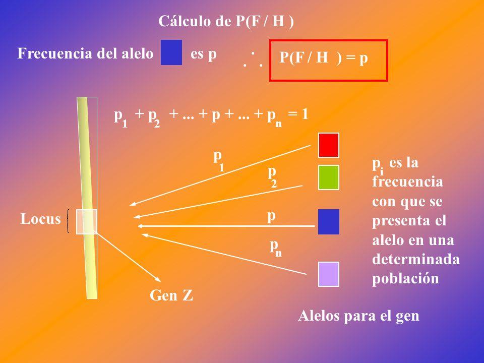Locus Gen Z Alelos para el gen p 1 p 2 p n p + p +...