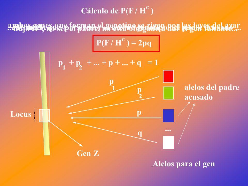 Locus Gen Z Alelos para el gen p 1 p 2 p + p +... + p +...