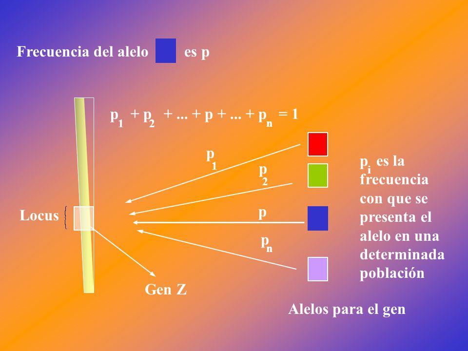 Locus Gen Z Alelos para el gen p + p +... + p +...