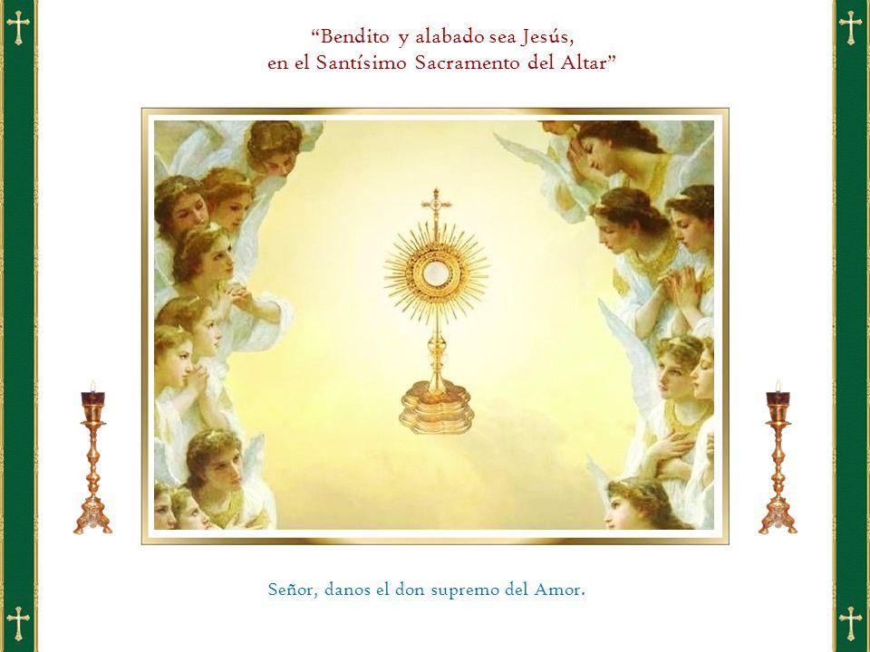 Bendito y alabado sea Jesús, en el Santísimo Sacramento del Altar Señor, danos el don supremo del Amor.