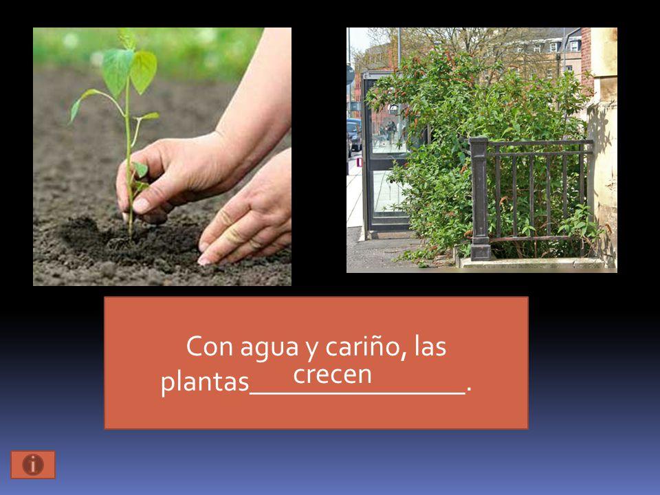 Con agua y cariño, las plantas_______________. crecen