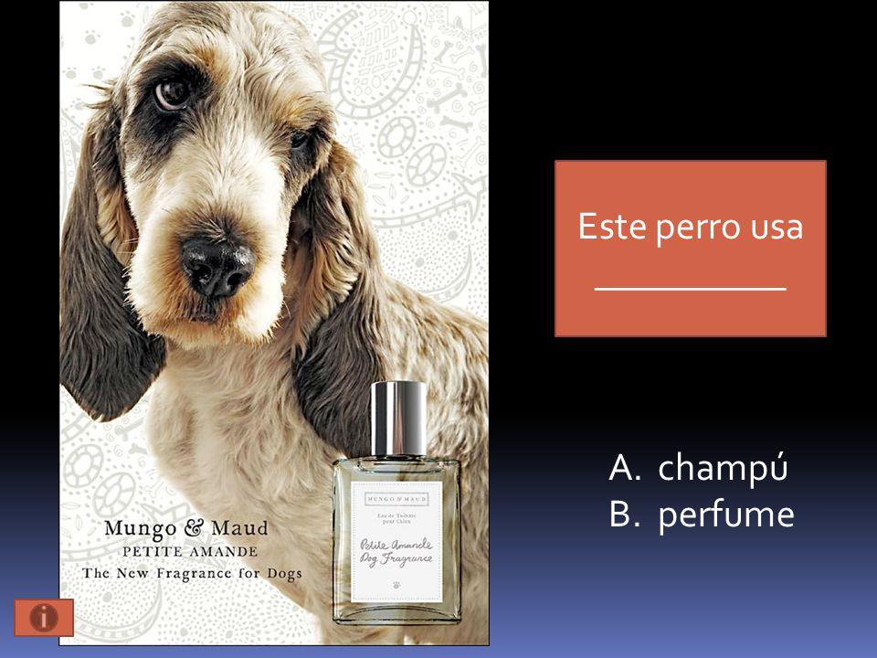 Este perro usa __________ A.champú B.perfume