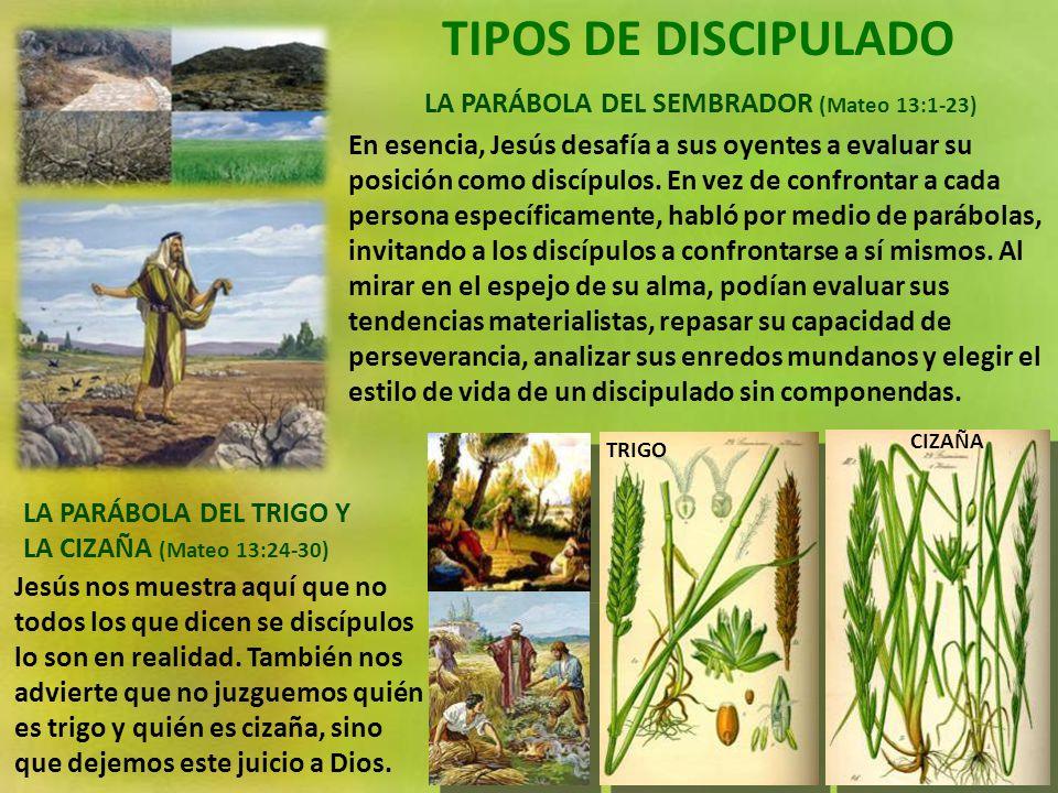 TIPOS DE DISCIPULADO LA PARÁBOLA DEL SEMBRADOR (Mateo 13:1-23) LA PARÁBOLA DEL TRIGO Y LA CIZAÑA (Mateo 13:24-30) En esencia, Jesús desafía a sus oyentes a evaluar su posición como discípulos.