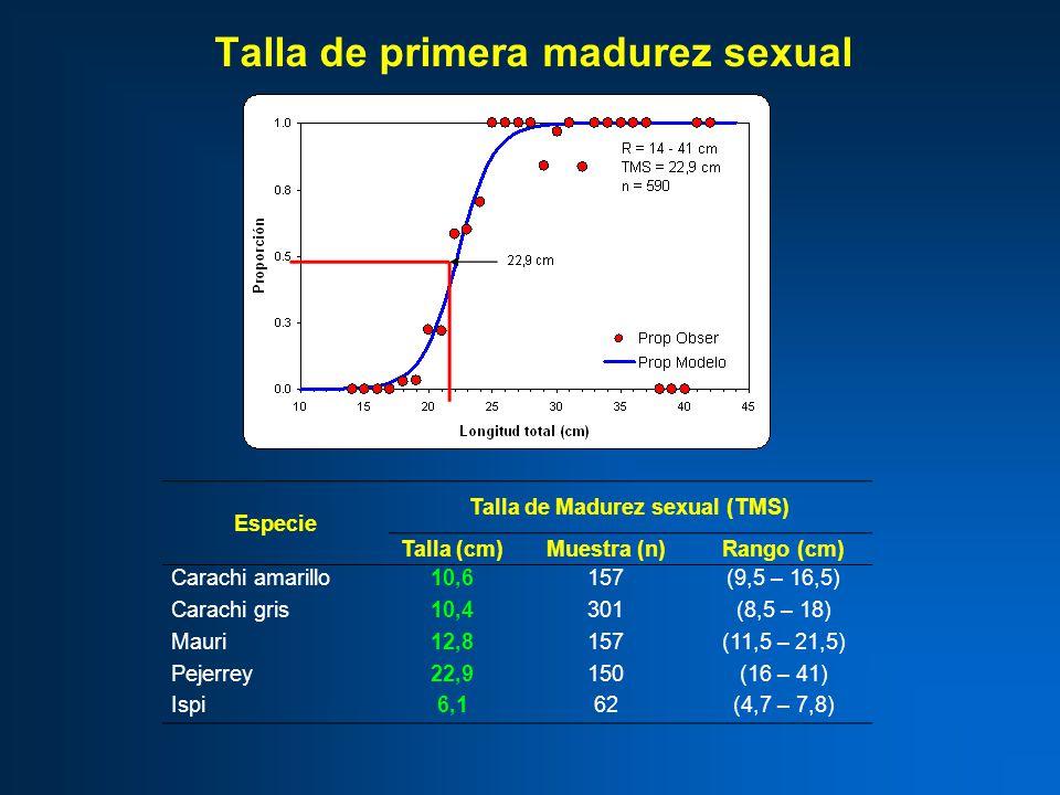Talla de primera madurez sexual Especie Talla de Madurez sexual (TMS) Talla (cm)Muestra (n)Rango (cm) Carachi amarillo10,6157(9,5 – 16,5) Carachi gris10,4301(8,5 – 18) Mauri12,8157(11,5 – 21,5) Pejerrey22,9150(16 – 41) Ispi6,162(4,7 – 7,8)