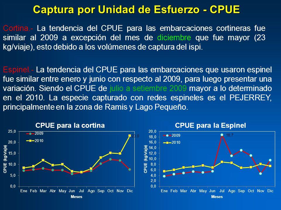 Cortina.- La tendencia del CPUE para las embarcaciones cortineras fue similar al 2009 a excepción del mes de diciembre que fue mayor (23 kg/viaje), esto debido a los volúmenes de captura del ispi.