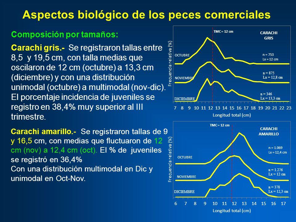 Aspectos biológico de los peces comerciales Composición por tamaños: Carachi gris.- Se registraron tallas entre 8,5 y 19,5 cm, con talla medias que oscilaron de 12 cm (octubre) a 13,3 cm (diciembre) y con una distribución unimodal (octubre) a multimodal (nov-dic).