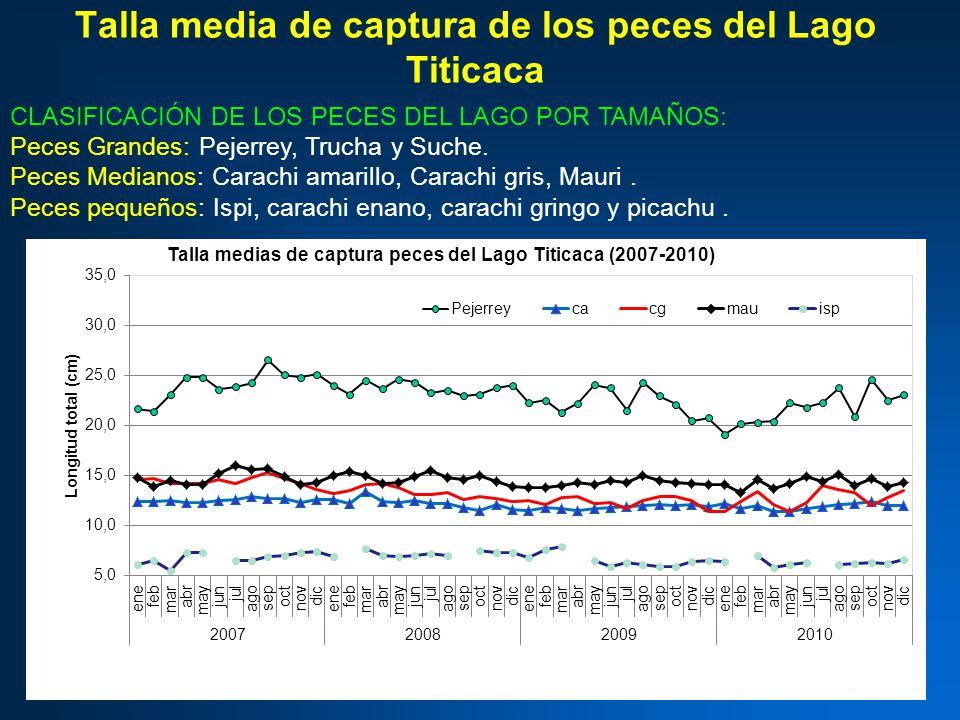 Talla media de captura de los peces del Lago Titicaca CLASIFICACIÓN DE LOS PECES DEL LAGO POR TAMAÑOS: Peces Grandes: Pejerrey, Trucha y Suche.