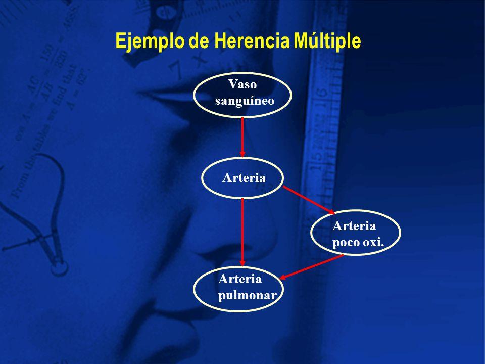 Ejemplo de Herencia Múltiple Vaso sanguíneo Arteria pulmonar Arteria poco oxi.