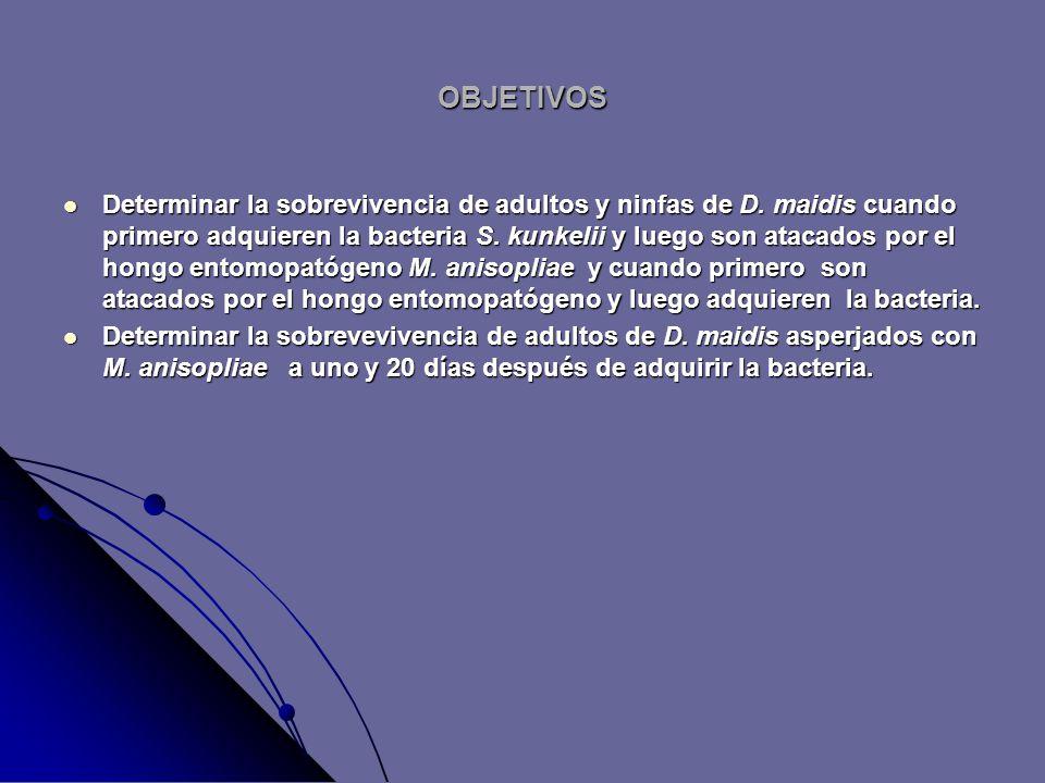 OBJETIVOS Determinar la sobrevivencia de adultos y ninfas de D.