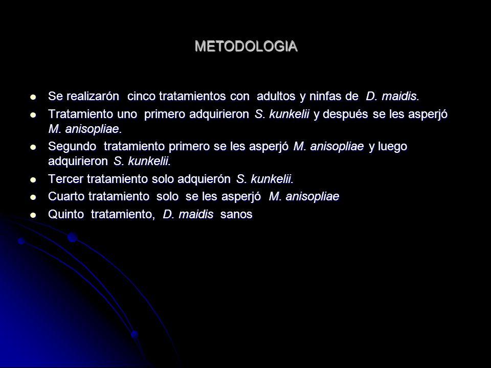 METODOLOGIA Se realizarón cinco tratamientos con adultos y ninfas de D.