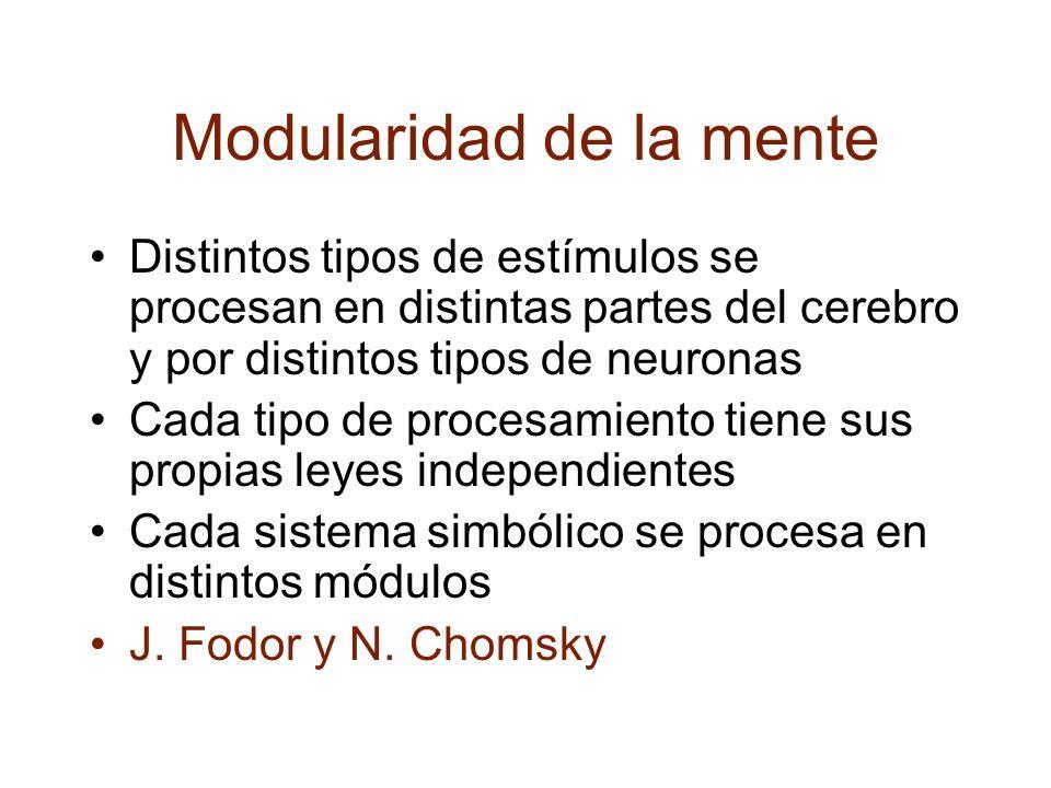 Modularidad de la mente Distintos tipos de estímulos se procesan en distintas partes del cerebro y por distintos tipos de neuronas Cada tipo de procesamiento tiene sus propias leyes independientes Cada sistema simbólico se procesa en distintos módulos J.