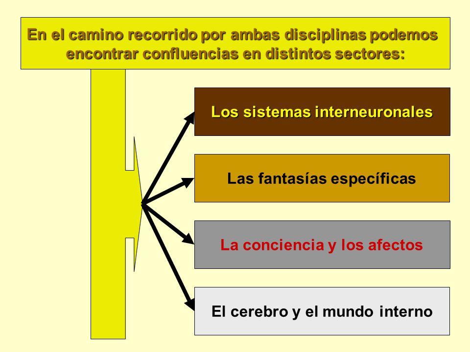Los sistemas interneuronales Las fantasías específicas La conciencia y los afectos El cerebro y el mundo interno En el camino recorrido por ambas disciplinas podemos encontrar confluencias en distintos sectores: