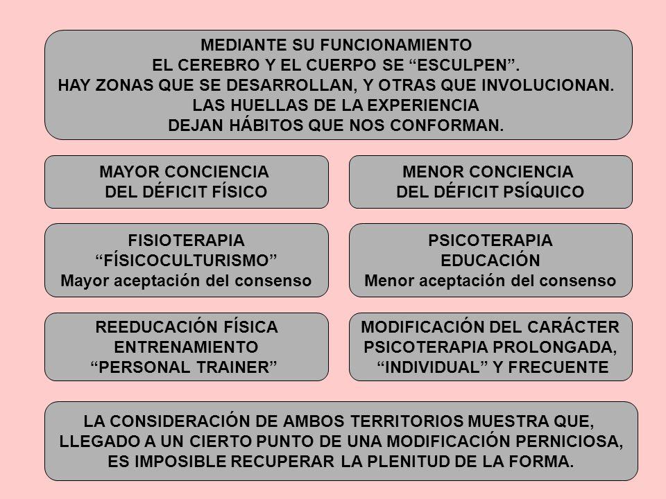 MEDIANTE SU FUNCIONAMIENTO EL CEREBRO Y EL CUERPO SE ESCULPEN .