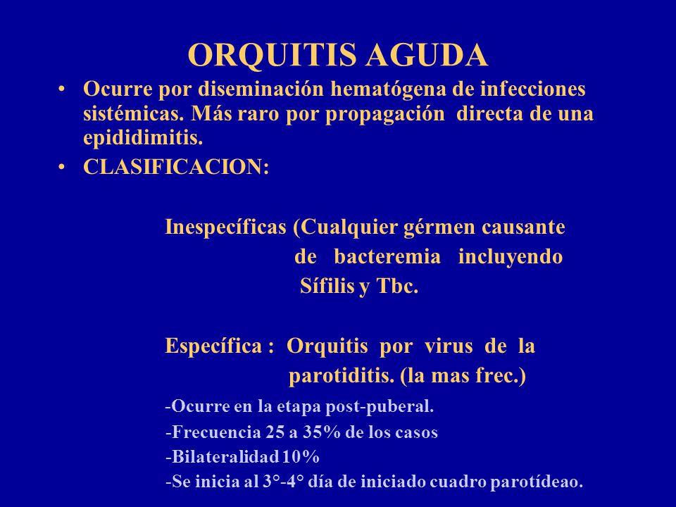 ORQUITIS AGUDA Ocurre por diseminación hematógena de infecciones sistémicas. Más raro por propagación directa de una epididimitis. CLASIFICACION: Ines