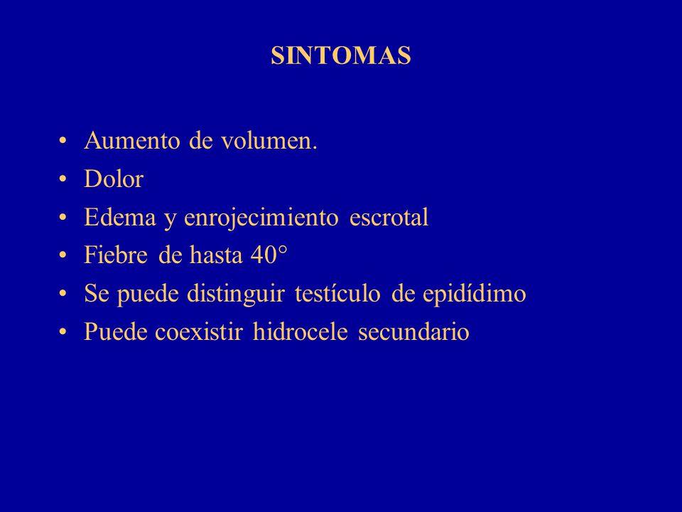 SINTOMAS Aumento de volumen. Dolor Edema y enrojecimiento escrotal Fiebre de hasta 40° Se puede distinguir testículo de epidídimo Puede coexistir hidr