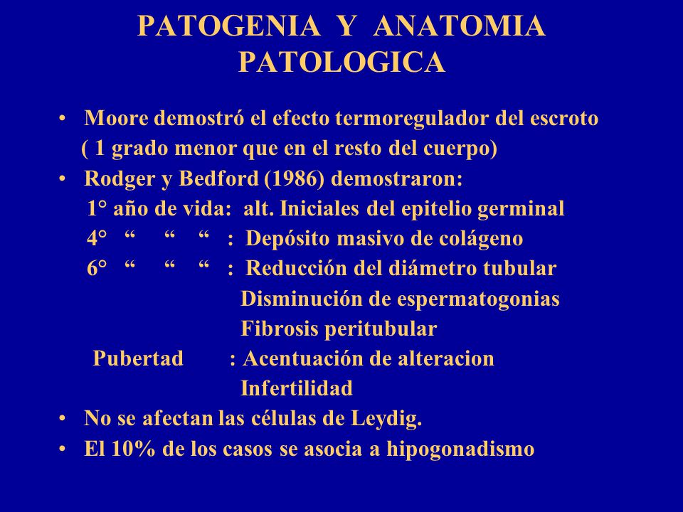 PATOGENIA Y ANATOMIA PATOLOGICA Moore demostró el efecto termoregulador del escroto ( 1 grado menor que en el resto del cuerpo) Rodger y Bedford (1986