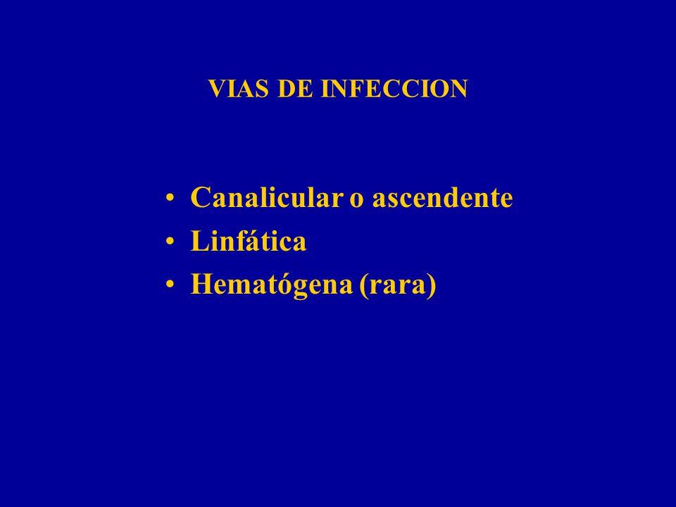 VIAS DE INFECCION Canalicular o ascendente Linfática Hematógena (rara)