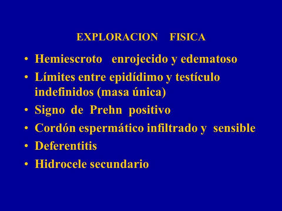 EXPLORACION FISICA Hemiescroto enrojecido y edematoso Límites entre epidídimo y testículo indefinidos (masa única) Signo de Prehn positivo Cordón espe