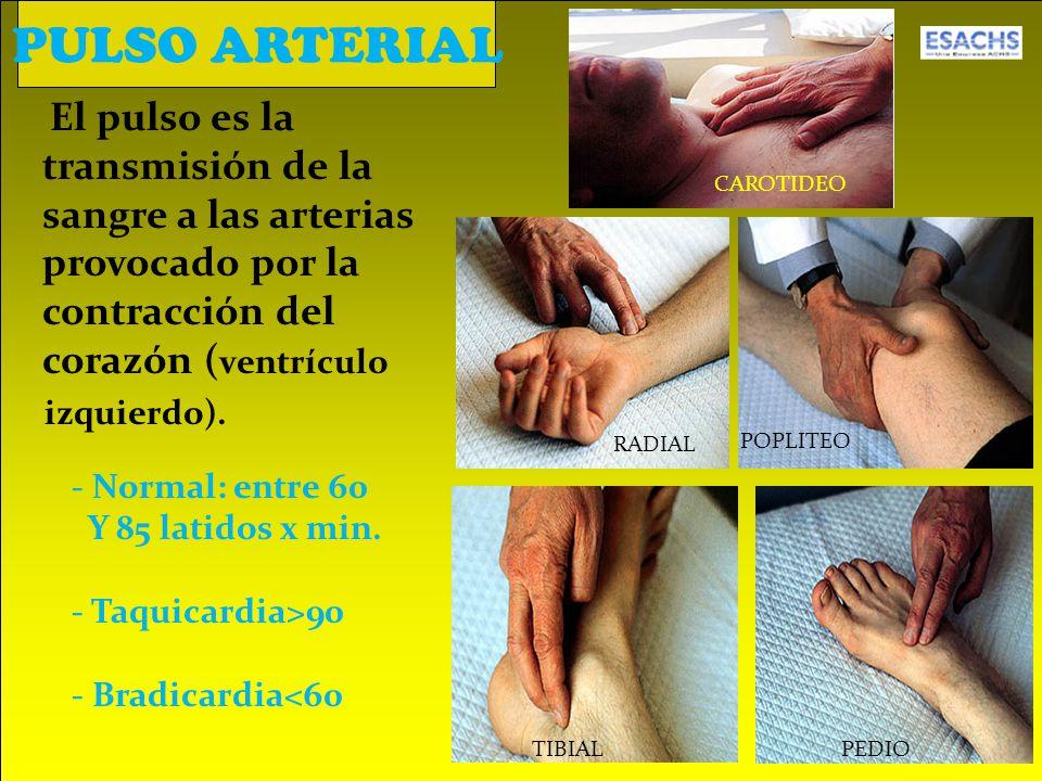 El pulso es la transmisión de la sangre a las arterias provocado por la contracción del corazón ( ventrículo izquierdo).