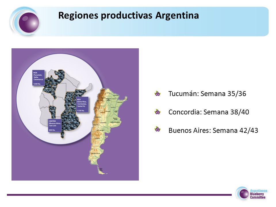 Regiones productivas Argentina Tucumán: Semana 35/36 Concordia: Semana 38/40 Buenos Aires: Semana 42/43