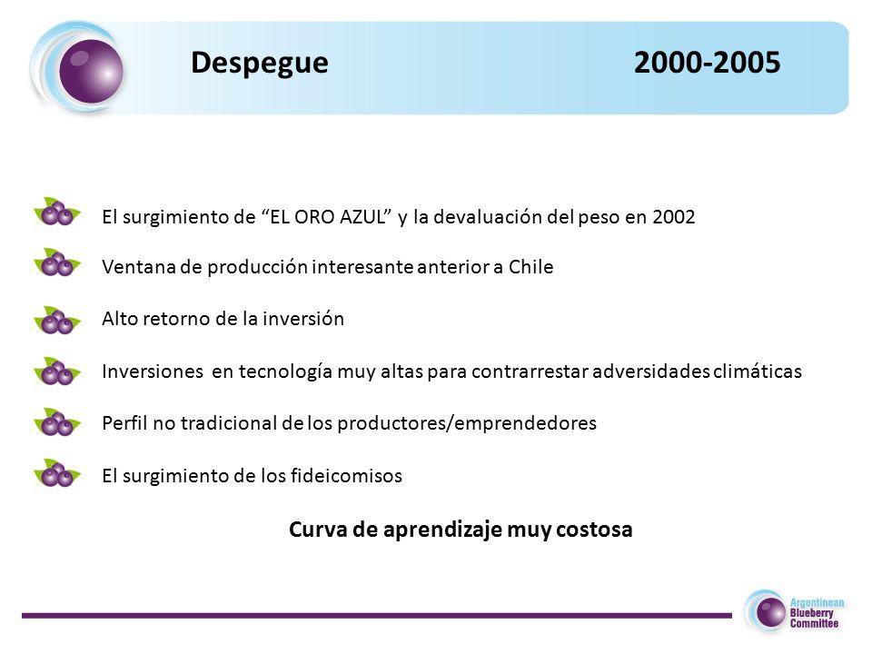 Despegue 2000-2005 El surgimiento de EL ORO AZUL y la devaluación del peso en 2002 Ventana de producción interesante anterior a Chile Alto retorno de la inversión Inversiones en tecnología muy altas para contrarrestar adversidades climáticas Perfil no tradicional de los productores/emprendedores El surgimiento de los fideicomisos Curva de aprendizaje muy costosa