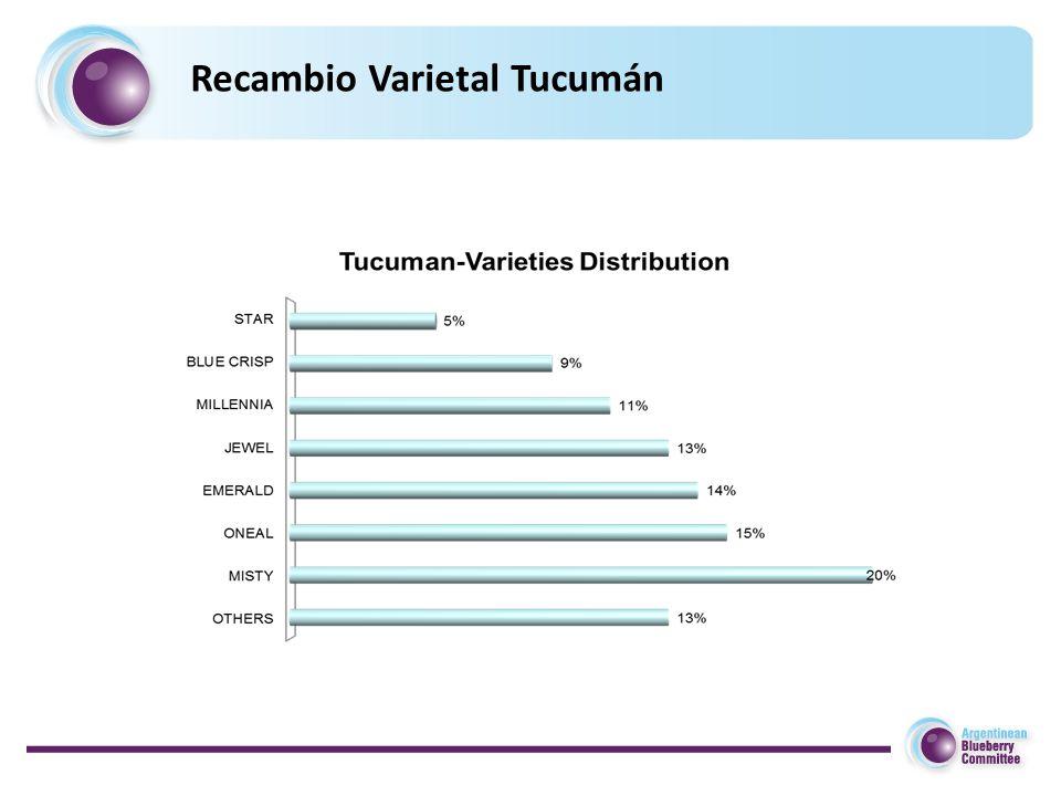Recambio Varietal Tucumán