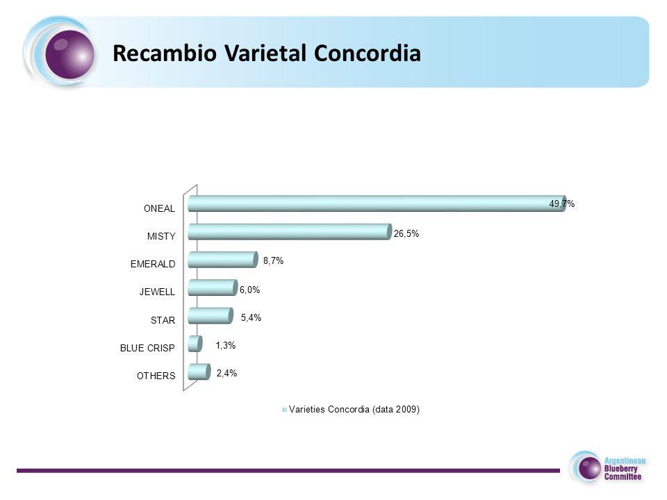 Recambio Varietal Concordia