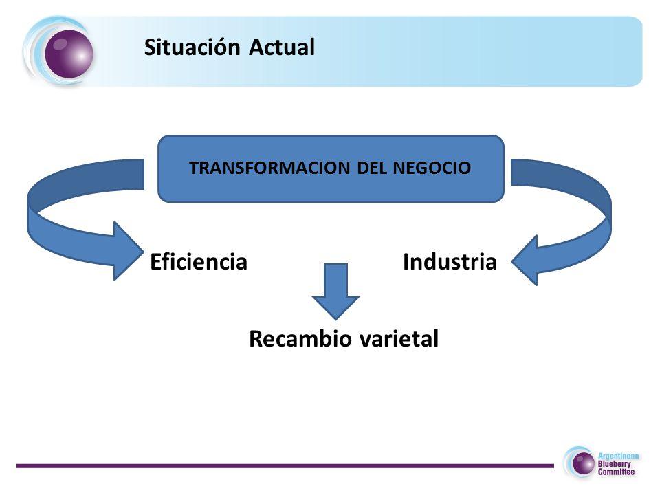 Situación Actual TRANSFORMACION DEL NEGOCIO Eficiencia Recambio varietal Industria