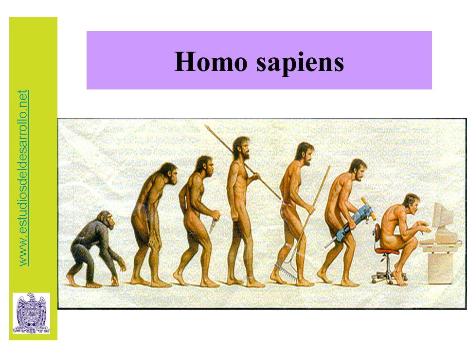Homo sapiens www.estudiosdeldesarrollo.net