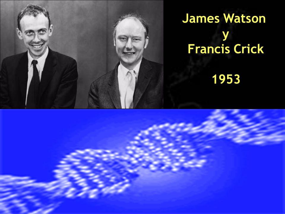 James Watson y Francis Crick 1953