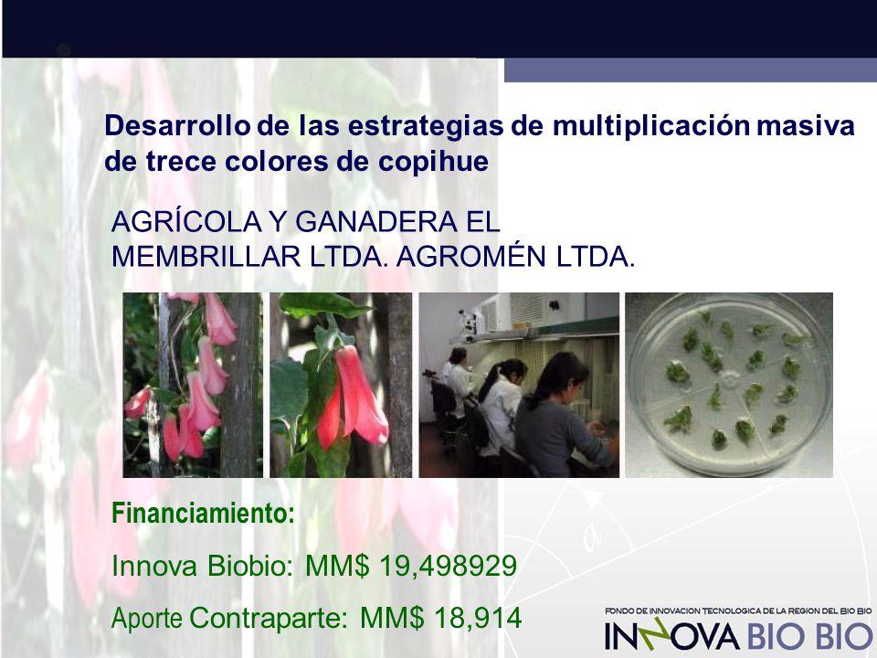 Desarrollo de las estrategias de multiplicación masiva de trece colores de copihue AGRÍCOLA Y GANADERA EL MEMBRILLAR LTDA.