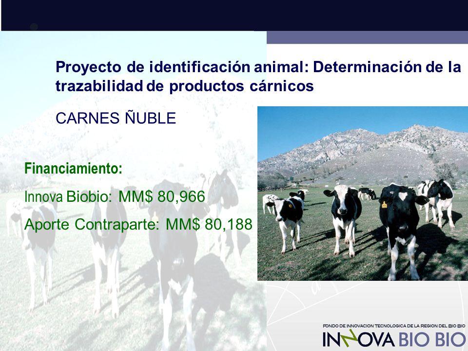 Proyecto de identificación animal: Determinación de la trazabilidad de productos cárnicos CARNES ÑUBLE Financiamiento: Innova Biobio: MM$ 80,966 Aporte Contraparte: MM$ 80,188