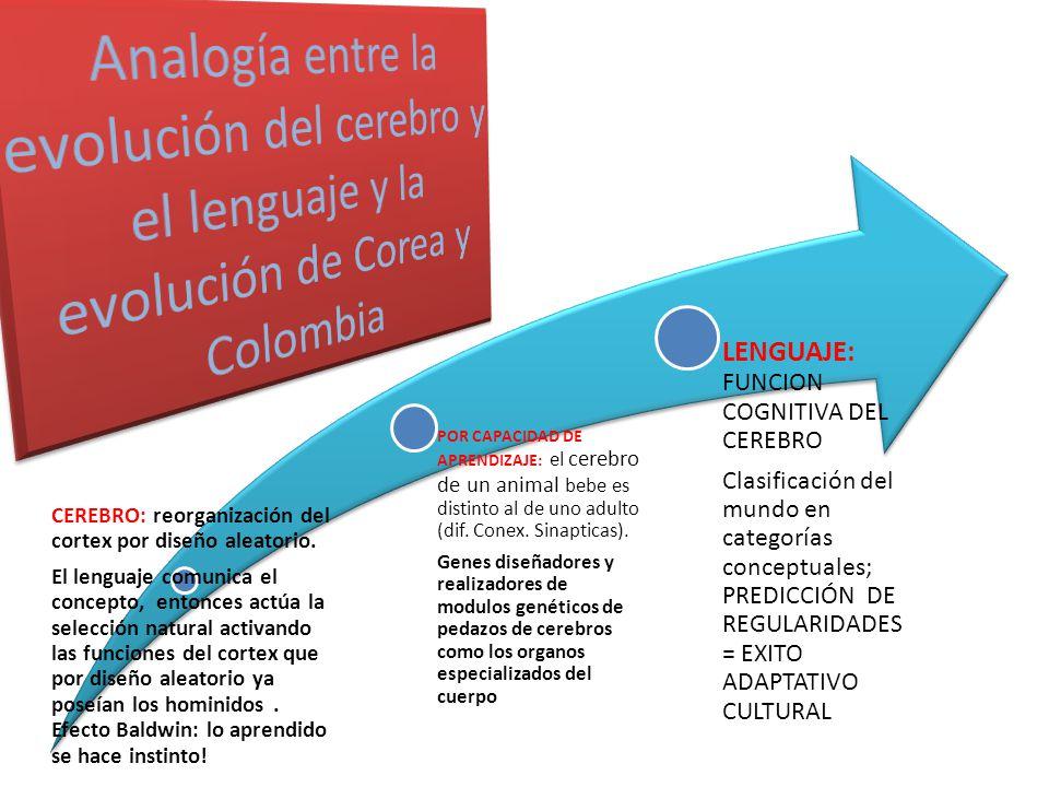 CEREBRO: reorganización del cortex por diseño aleatorio.