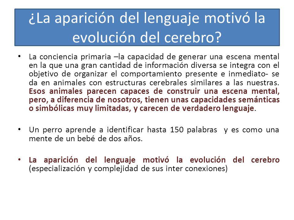 ¿La aparición del lenguaje motivó la evolución del cerebro.