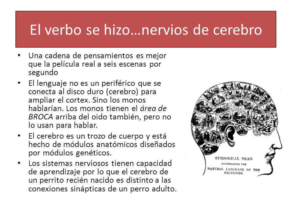 El verbo se hizo…nervios de cerebro Una cadena de pensamientos es mejor que la película real a seis escenas por segundo El lenguaje no es un periférico que se conecta al disco duro (cerebro) para ampliar el cortex.
