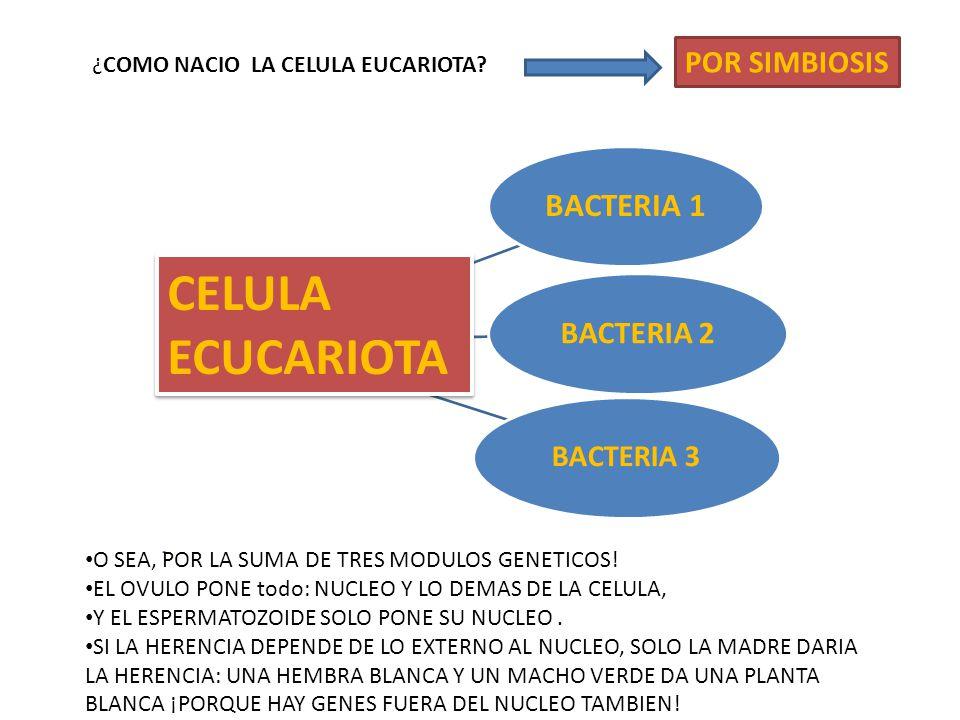 BACTERIA 1 BACTERIA 2 BACTERIA 3 CELULA ECUCARIOTA CELULA ECUCARIOTA ¿COMO NACIO LA CELULA EUCARIOTA.