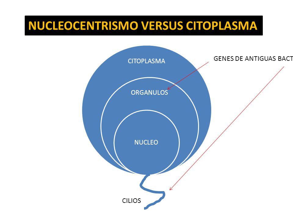 CITOPLASMA ORGANULOS NUCLEO NUCLEOCENTRISMO VERSUS CITOPLASMA GENES DE ANTIGUAS BACTERIAS CILIOS