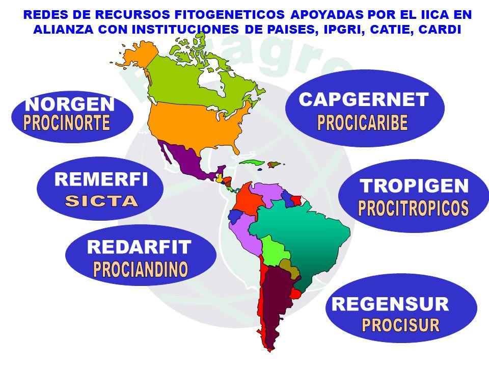 REDES DE RECURSOS FITOGENETICOS APOYADAS POR EL IICA EN ALIANZA CON INSTITUCIONES DE PAISES, IPGRI, CATIE, CARDI CAPGERNET TROPIGEN REGENSUR REDARFIT NORGEN REMERFI