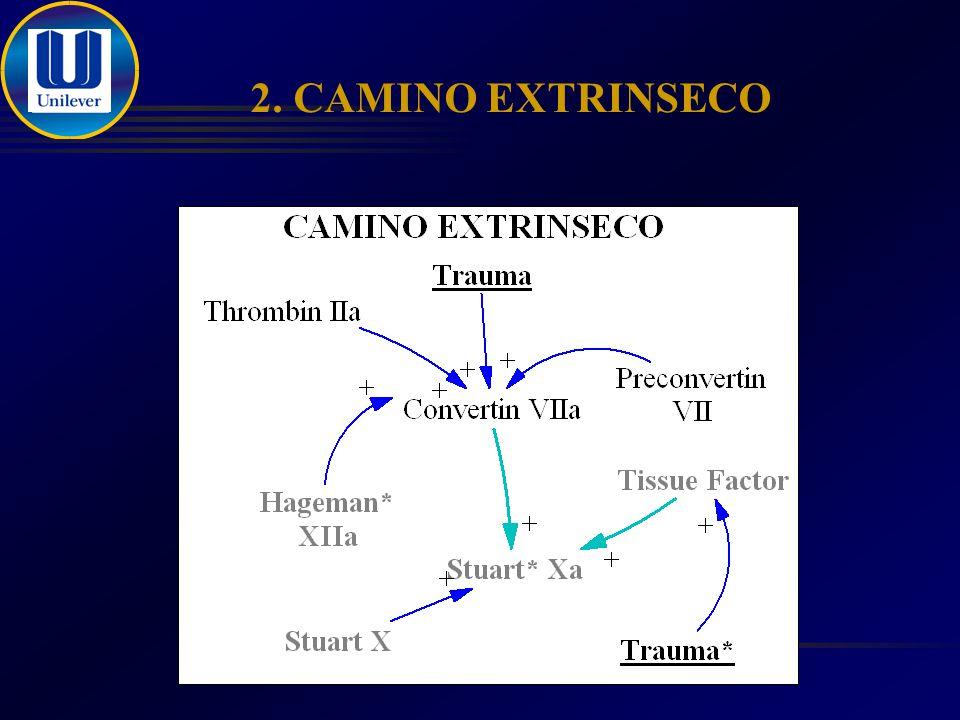2. CAMINO EXTRINSECO