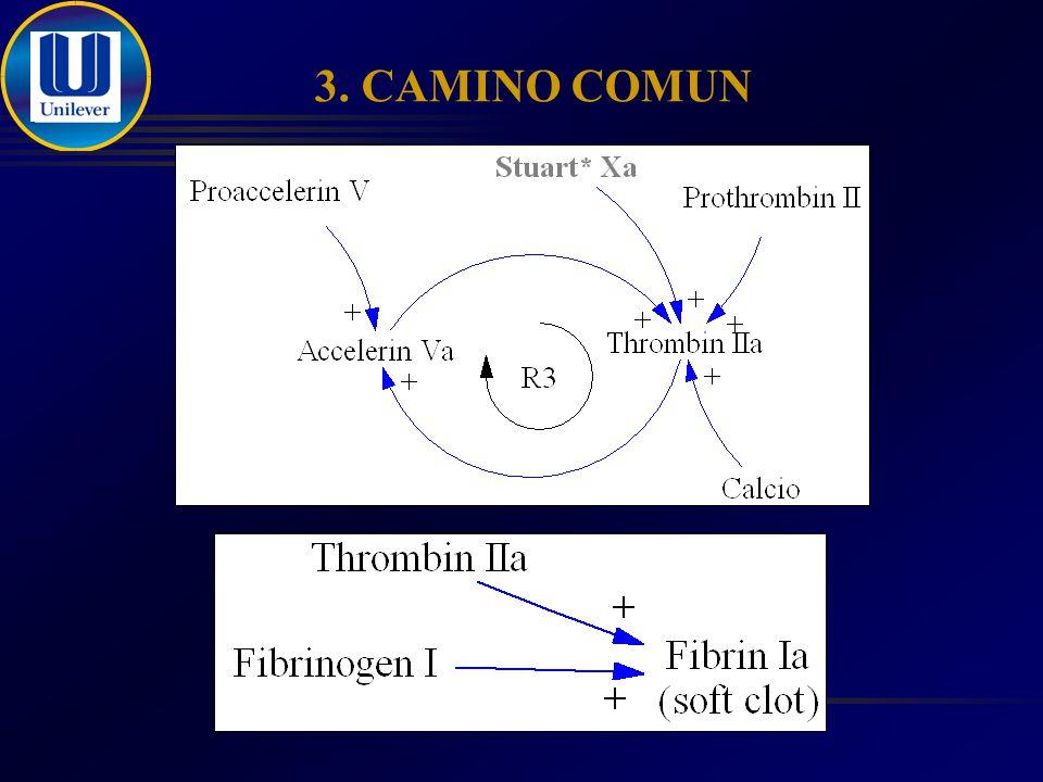 3. CAMINO COMUN