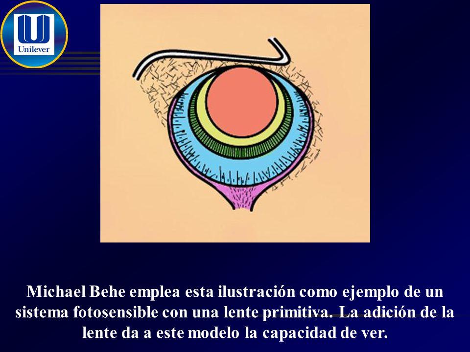 Michael Behe emplea esta ilustración como ejemplo de un sistema fotosensible con una lente primitiva.