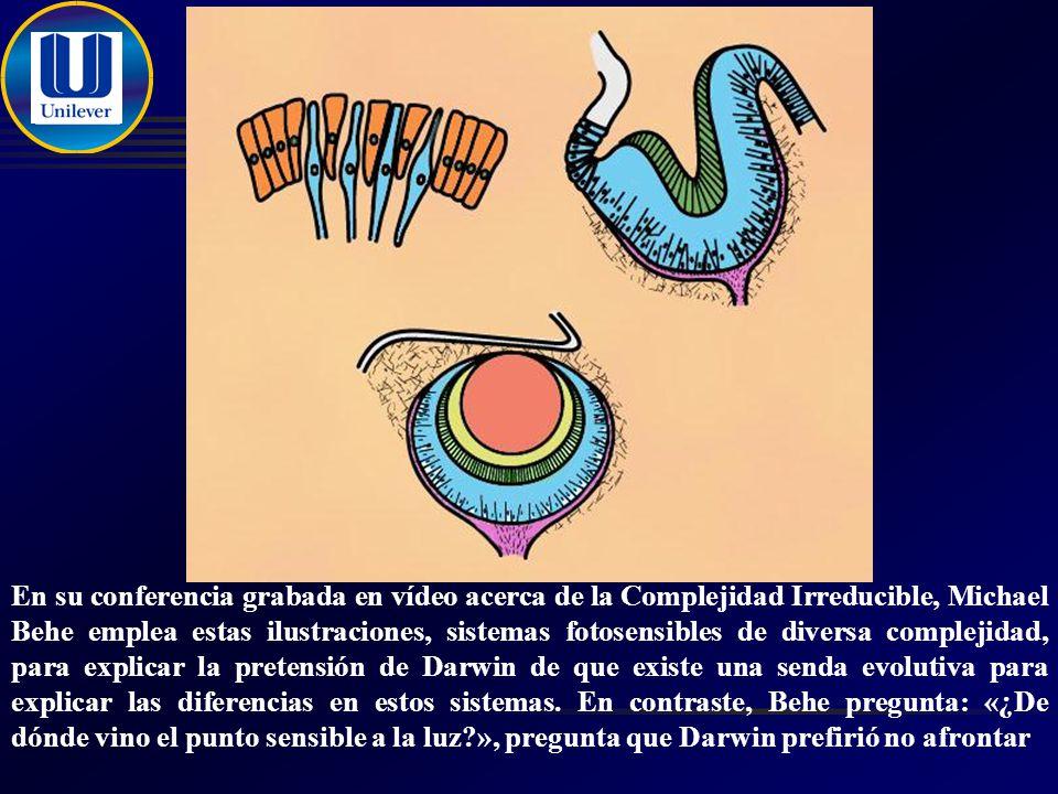En su conferencia grabada en vídeo acerca de la Complejidad Irreducible, Michael Behe emplea estas ilustraciones, sistemas fotosensibles de diversa complejidad, para explicar la pretensión de Darwin de que existe una senda evolutiva para explicar las diferencias en estos sistemas.
