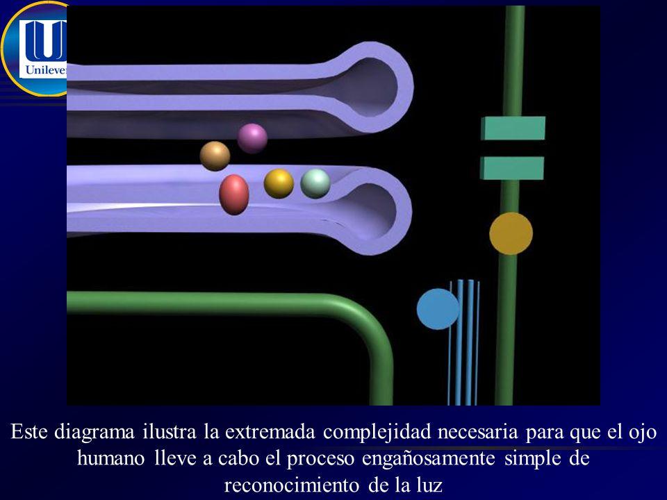 Este diagrama ilustra la extremada complejidad necesaria para que el ojo humano lleve a cabo el proceso engañosamente simple de reconocimiento de la luz