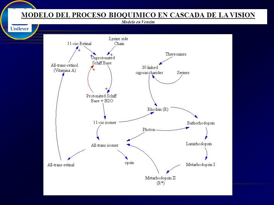 MODELO DEL PROCESO BIOQUIMICO EN CASCADA DE LA VISION Modelo en Vensim