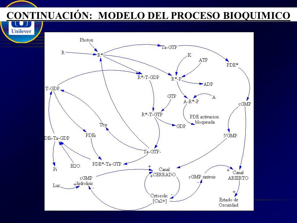 CONTINUACIÓN: MODELO DEL PROCESO BIOQUIMICO