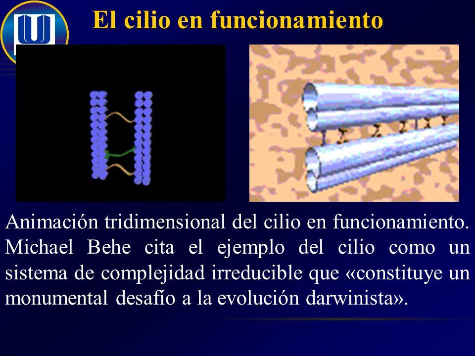 El cilio en funcionamiento Animación tridimensional del cilio en funcionamiento.
