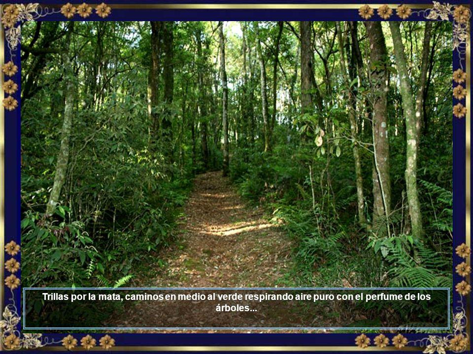 Hay toda una estructura aparejada para proporcionar momentos agradables a los turistas en esos paseos rurales, ofreciendo bienestar, diversión y contacto directo con la naturaleza...